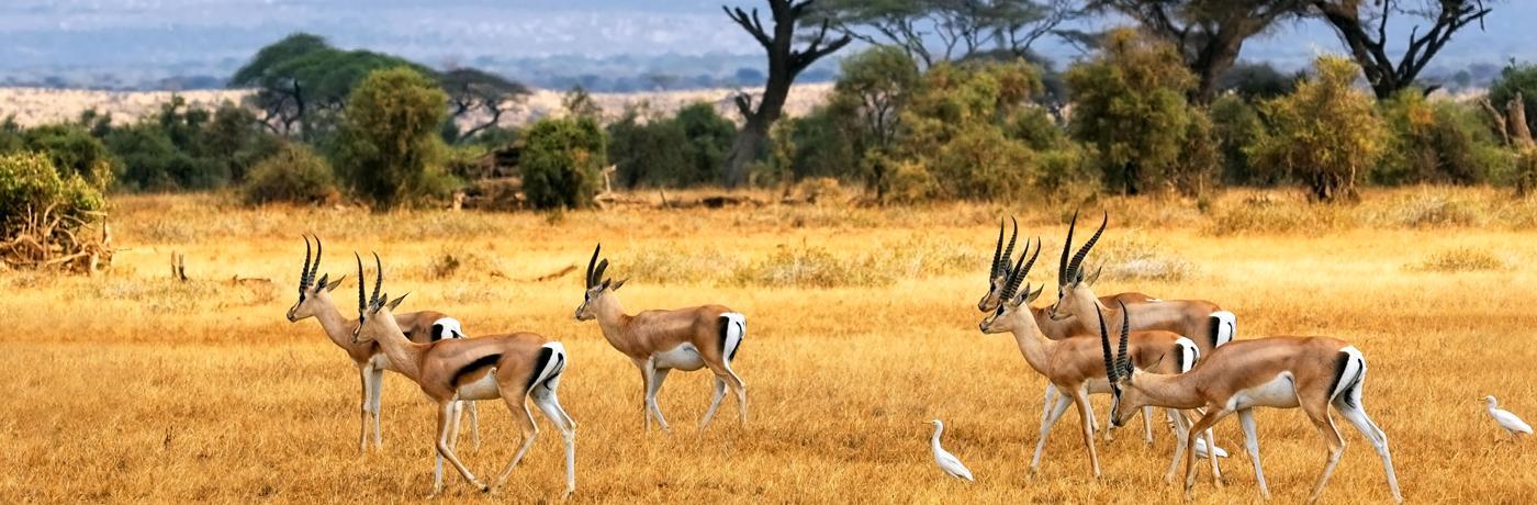 safari-v-yuar