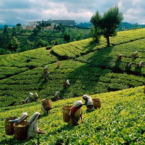 Шри-Ланка 2