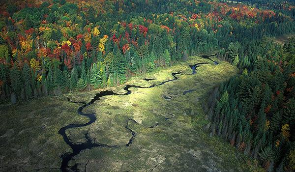 Algonquin Provincial Park. Ontario. Canada