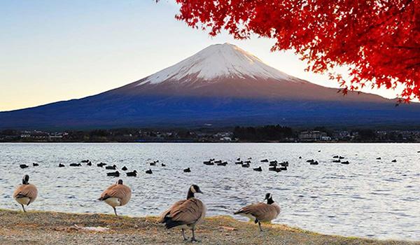 Фудзи гора