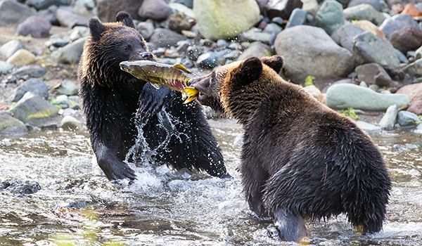 Национальный парк Сиретоко медведи