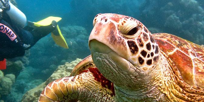 aktivnoe-znakomstvo-pro-dive-ekskursii-i-kursy-s-akvalangom