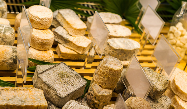 8 магазин сыра сыр