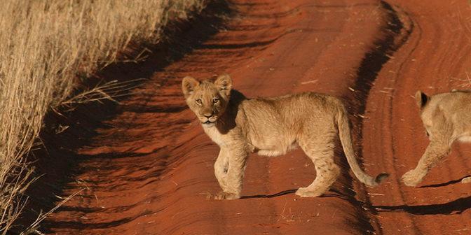 aktivnyj-otdyx-v-namibii