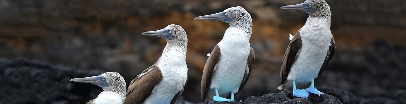 galapagos-otel-scalesia-lodge