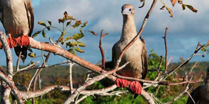 novyj-god-2019-na-galapagosskix-ostrovax-na-sudne-silver-galapagos