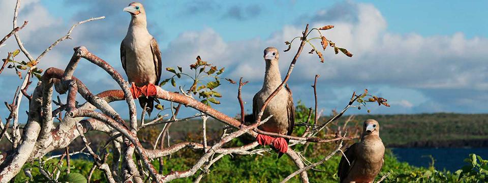 the-galapagos-islands-genovesa-el-barranco_Slider_960-360b